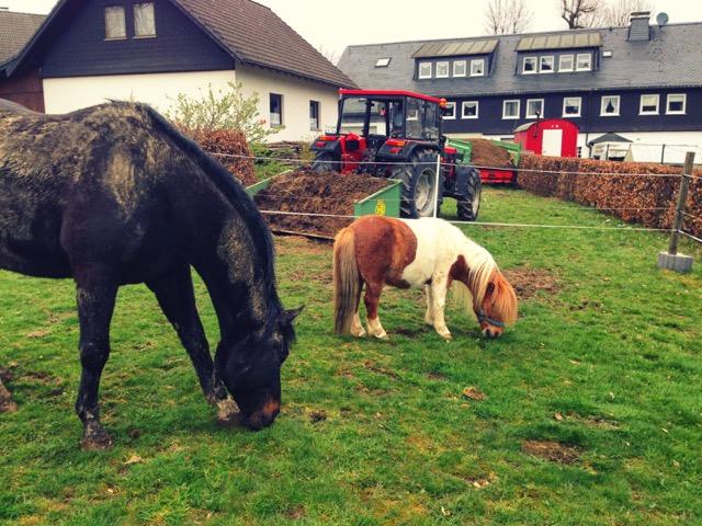 Egon und Lasse im Sauerland
