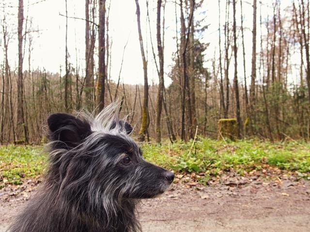Hund wandern im Hochsauerland