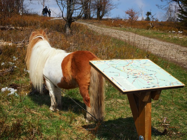 Kahler Asten mit Pferd