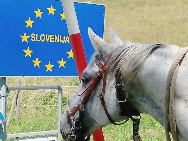 Mit Pferd nach Slowenien