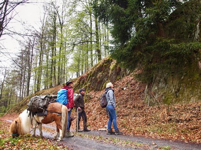 Mit Ranger im Sauerland unterwegs