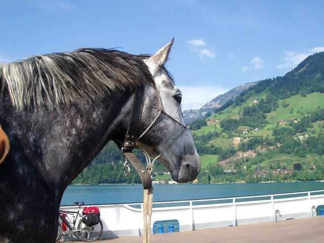 Pferd auf Fähre