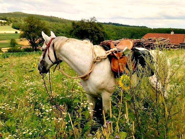 Pferd Satteltaschen