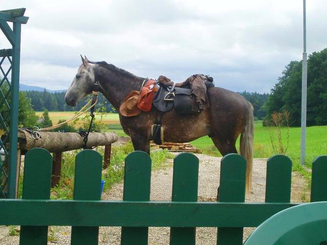 Santiago mit Pferd
