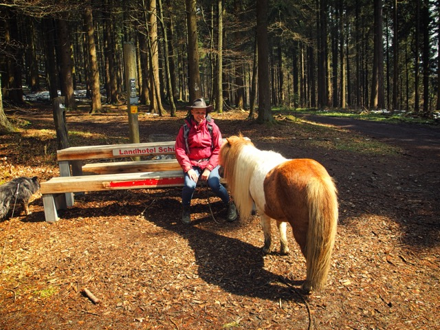 Wanderung im Sauerland Pausenbank