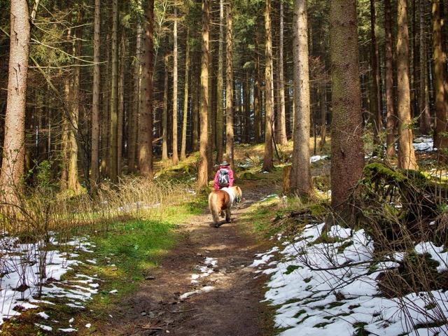 Wanderung im Kahlen Asten im Schnee