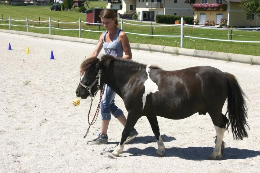 Online Kurs Targetarbeit Pferd