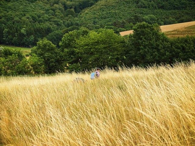 Wandern im Feld