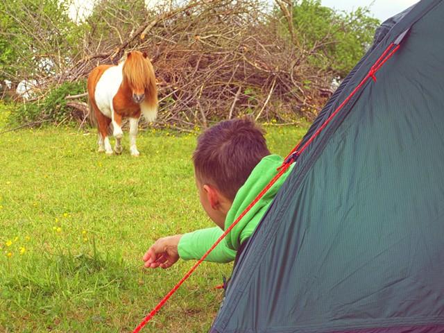 Zelten beim Pferd