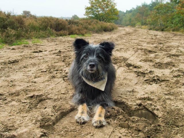 Mit Hund in Holland