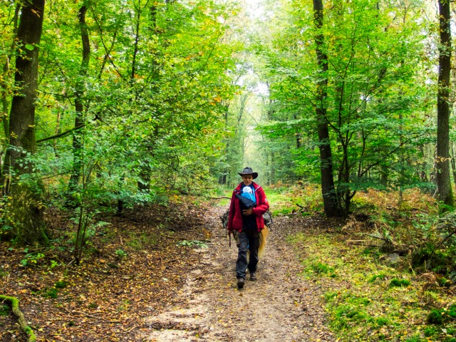 Wandern in der Veluwe