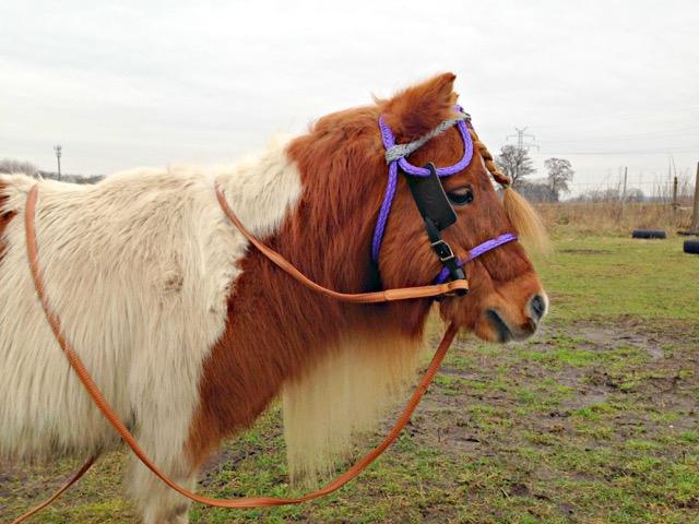 Fahrtrense Pferd einfahren gebisslos
