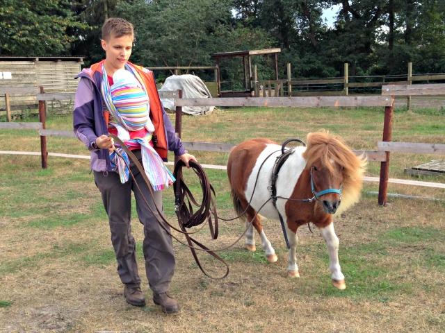 Pferd einfahren Doppellonge