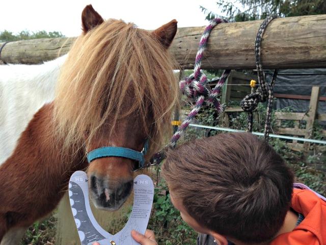 Pferd Gebiss Größe ausmessen