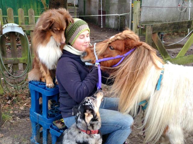 Wareika zum Pferd einfahren